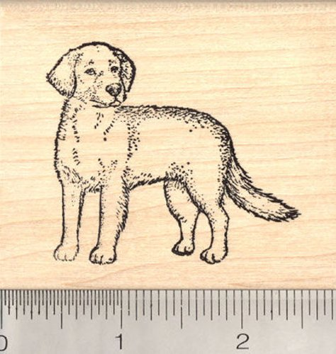 Golden Retriever Dog Rubber Stamp