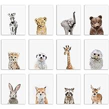Baby Safari and Woodland Poster Prints - Set of Twelve Adorable Furry Portraits Wall Art Decor 8x10 Elephant - Giraffe - Lion - Cheetah - Zebra - Meerkat - Raccoon - Deer - Owl - Bear - Bunny - Fox