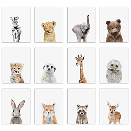 Baby Safari and Woodland Poster Prints - Set of Twelve Adorable Furry Portraits Wall Art Decor 8x10 Elephant - Giraffe - Lion - Cheetah - Zebra - Meerkat - Raccoon - Deer - Owl - Bear - Bunny - Fox