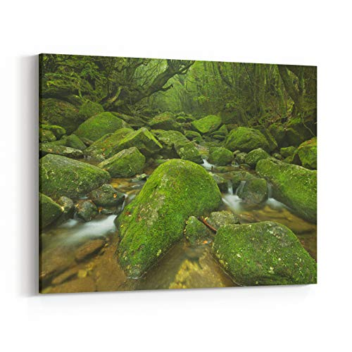 Rosenberry Rooms Canvas Wall Art Prints - A River Through Lush Rainforest Along The Shiratani Unsuikyo Trail On The Southern Island of Yakushima, Japan (36 x 24 inches)