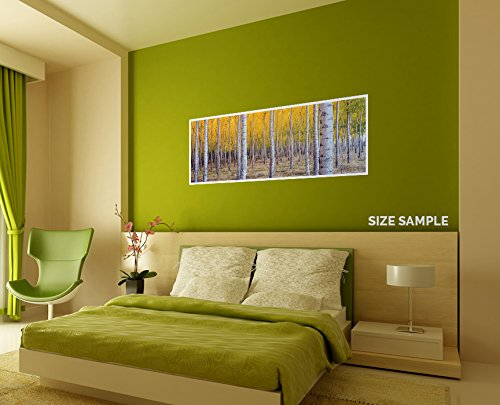 JP London PAN5315 uStrip Birch Tree Forest Colorful High Resolution Peel Stick Removable Wallpaper Sticker Mural 48 Wide by 19.75 High