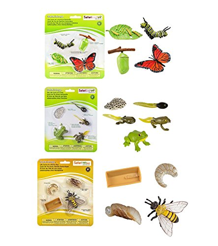 Safari Ltd Life Cycle of a Monarch Butterfly bundled with Safari Ltd Safariology Life Cycle of a Frog and Safari Ltd Safariology the Life Cycle of a Honey Bee