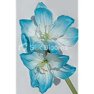Artificial Stem of 2 Fresh Touch Blue Tipped Amaryllis 89