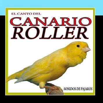 canto de canario roller