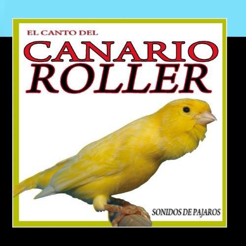 El Canto del Canario Roller. Sonidos de Pajaros