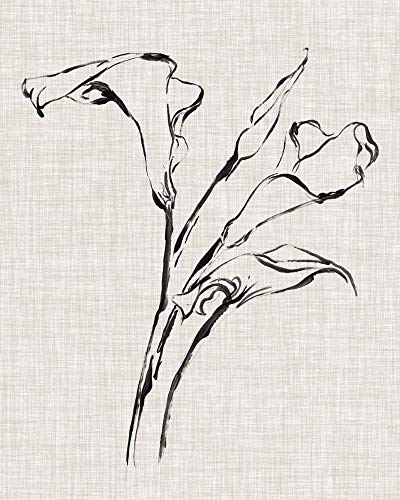 Floral Ink Study IV by Ethan Harper Art Print, 24 x 30 inches