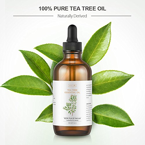 Tea Tree Essential Oil, Large 4 oz Bottle, 100% Pure & Natural, Undiluted Therapeutic Grade, Treats Acne, Cutaneous Skin Tags, Bacterial Infections, Nail Fungus by Aprilis (Image #6)