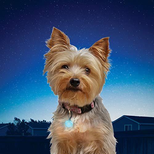 (Nite Ize PetLit LED Collar Light, Dog or Cat Collar Light, Replaceable Batteries, White LED Turquoise Jewel Design)