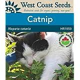 Catnip Seeds - Catnip Organic
