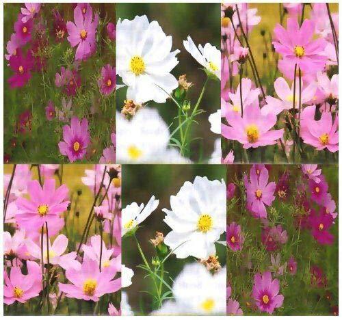 FARMERLY Las Semillas orgánicas: Las Sucio Jardinero de la ...