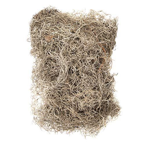 Darice Spanish Moss - Dry - Bulk - 4 Lbs