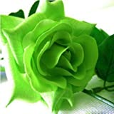 100 Seeds Green Rose Flower Seeds Lover To Home Garden Green Rose Flower Seeds