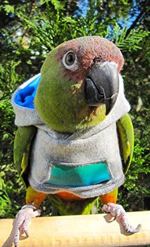 clothes for parrots