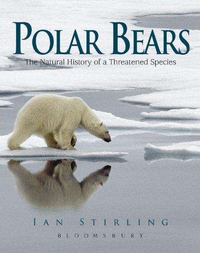 Polar Bears (Polar Bear Polar Bear)