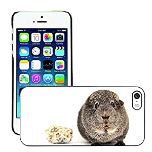 Hot Style Cell Phone PC Hard Case Cover // M00117100 Guinea Pig Smooth Hair Silver Animal // Apple iPhone 5 5S 5G
