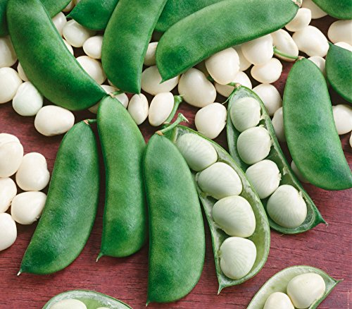 Canning Lima Beans - Henderson Lima Beans,100+ Premium Heirloom Seeds, Fantastic & Must Have for Home Garden!, (Isla's Garden Seeds), Non GMO Organic, Highest Quality Seeds, 90% Germination Rates, 100% Pure