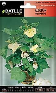 Semillas de Flores - Algodón ornamental - Batlle: Amazon.es: Jardín