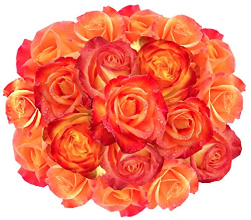 Flowers delivery on Amazon Bouquet of 25 YELLOW AND ORANGE Fresh Roses Delivered with Free Flower Food Packet. Long Stem Roses Bud Form Guaranteed Best Flower Gift for Birthday Valentines Mothers Day (Gifts, Flowers & Food)