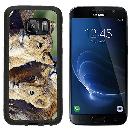 MSD Premium Samsung Galaxy S7 Aluminum Backplate Bumper Snap Case lioness walking...