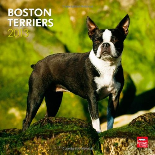 Boston Terriers 2013 Square 12X12 Wall Calendar (Multilingual ()