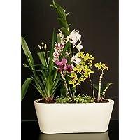 maceta de auto-riego Hidro+z en cerámica ecológica jardinera