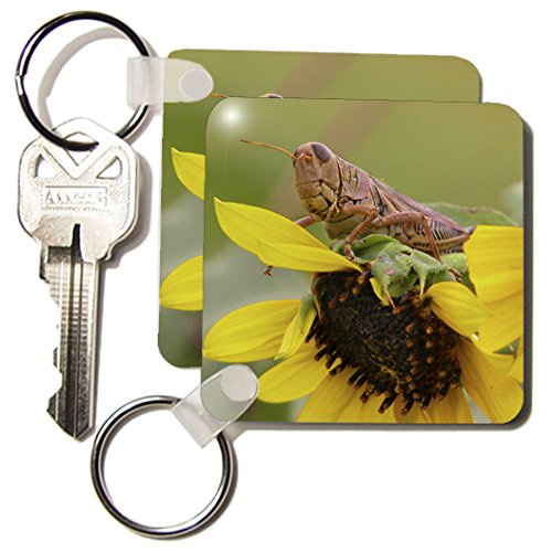 3dRose Little Snack, Grasshopper on a Sunflower - Key Chains, 2.25 x 4.5 inches, set of 2 (kc_12257_1)