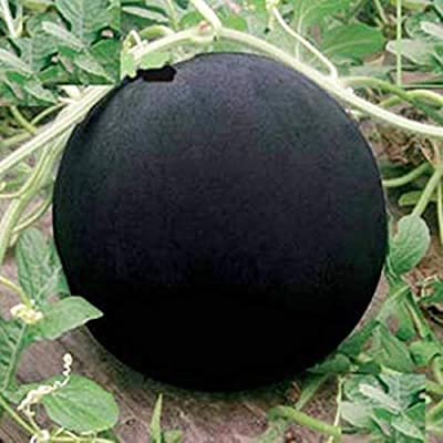 HOTUEEN 20/50Pcs Garden Balcony Beautiful Fruit Plants Glass Ball Watermelon Seeds Fruits : Garden & Outdoor