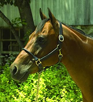 Perris Horse Rolled Nose 1-Inch Leather Halter Black Perri/'s 180