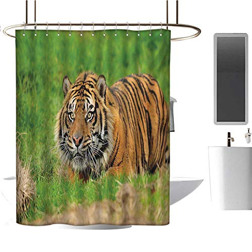 Tiger Shower Curtains 3D Digital Printing Sumatran Feline Hiding in Ambush While Stalking Its Prey Moments Before Attack Bathroom Decor Set with Hooks Green Orange
