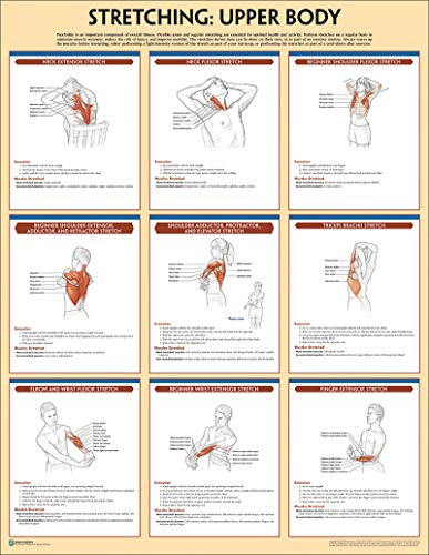 Stretching Poster: Upper Body (Anatomy) - Training Strength Poster Anatomy