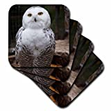 3dRose CST_79143_3 Pretty White Snowy Owl- Birds- Animals Ceramic Tile Coasters, (Set of 4)