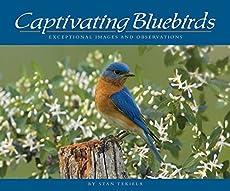 Slot bluebird house plans