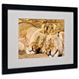 Trademark Fine Art National Zoo-Lions Canvas Wall Art by CATeyes, Black Frame