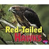 Red-Tailed Hawks (Birds of Prey)