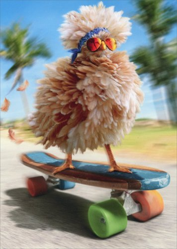 Fancy Chicken Skateboarding - Avanti Funny Birthday Card -
