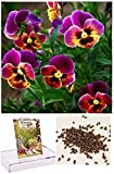 Homegrown Packet Pansy Seeds, 75 Seeds, Bright Lights Pansy