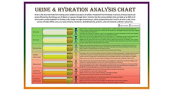 Escala de heces de Bristol Y orina & Hidratación análisis gráfico – Set de 2 carteles (A2, A3 y A4)
