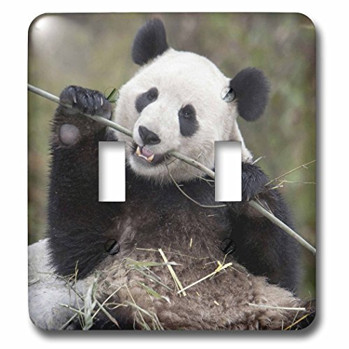 3dRose lsp_132354_2 China, Wolong, Giant Panda Bear Eating Bamboo As07 Aga0009 Alice Garland Light Switch ()