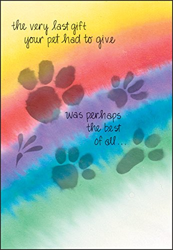 Pet Loss Sympathy Greeting Card All Species Rainbow Paw Prints(1) Single Card w/Env Made in USA