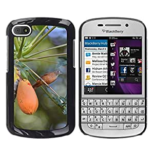 Hot Style Cell Phone PC Hard Case Cover // M00114553 Bird Papaya Thrush Birdie // BlackBerry Q10