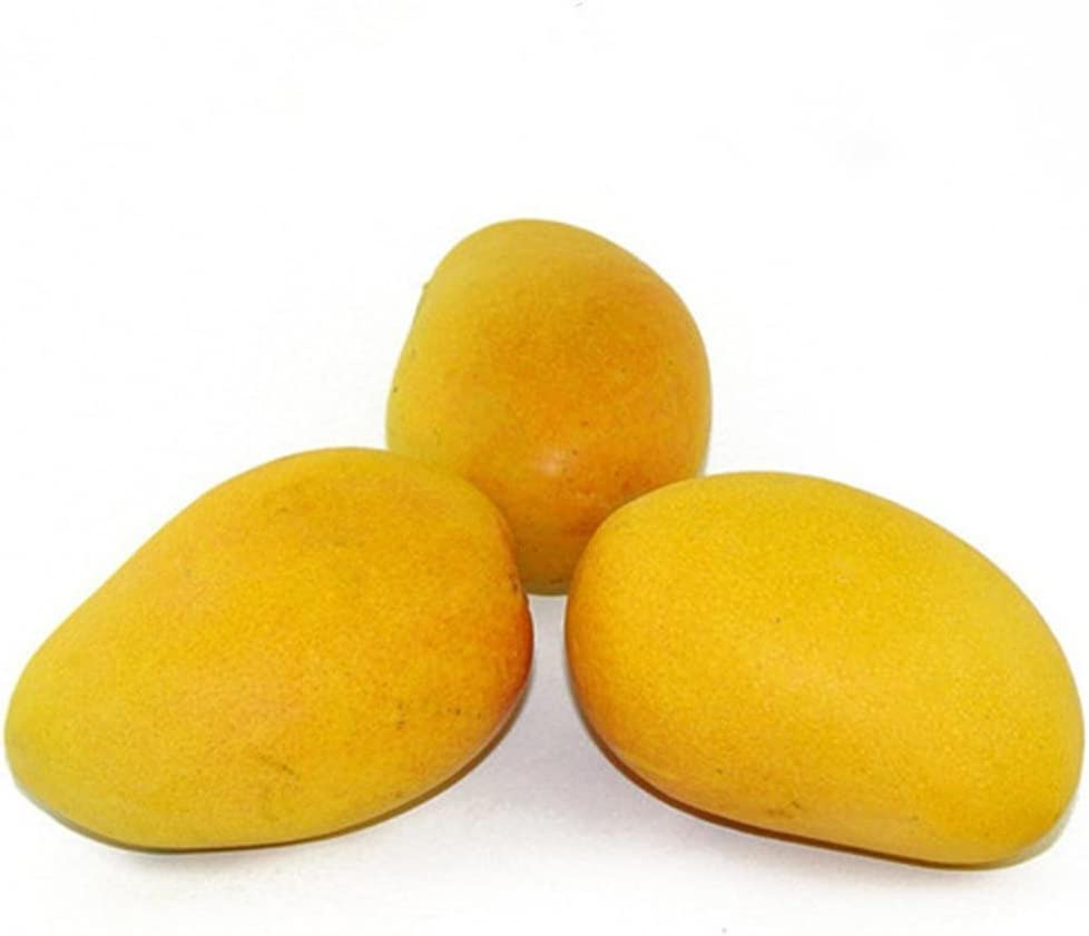 Caiuet Seed, Mango Seeds,Mango Tree Seeds Rare Organic Fruit Seeds Home Garden Fruit Tree Seeds Flowers Seed