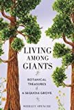 Living Among Giants: Botanical Treasures of a Sequoia Grove