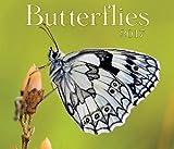 Butterflies 2017