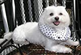 Puppy Bumper – Keep Your Dog on the Safe Side of the Fence -Black and White Paw -up to 10″, My Pet Supplies