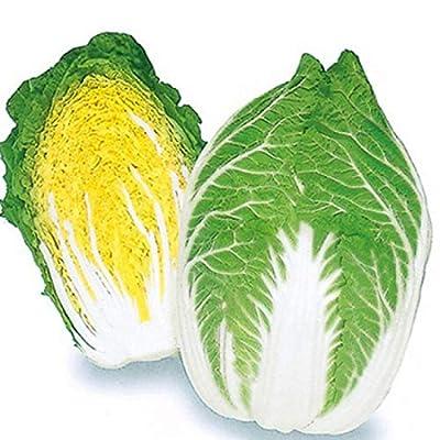 Business sasha Each Pack 25+ Seeds Heirloom Healthy Organic Vegetable Golden Hart Cabbage Seeds (3) : Garden & Outdoor