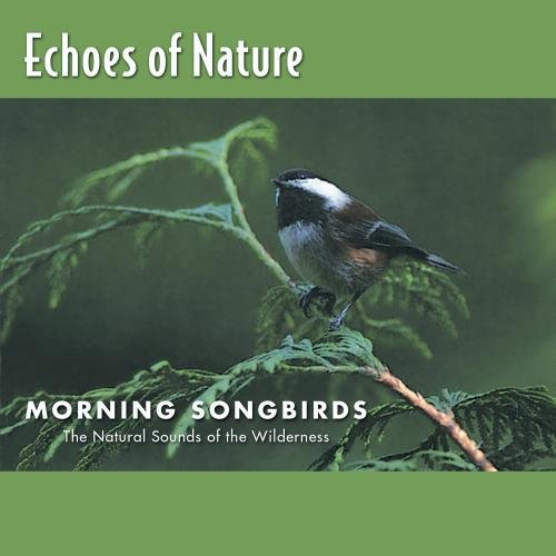 Echoes of Nature: Morning Songbirds (Feeder Presents Bird)