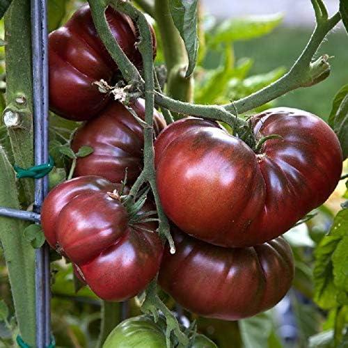 1250個の種子または1/8 OZ:ブラックブランディワイントマト、NON-GMO、ポテトリーフ、バラエティサイズ販売