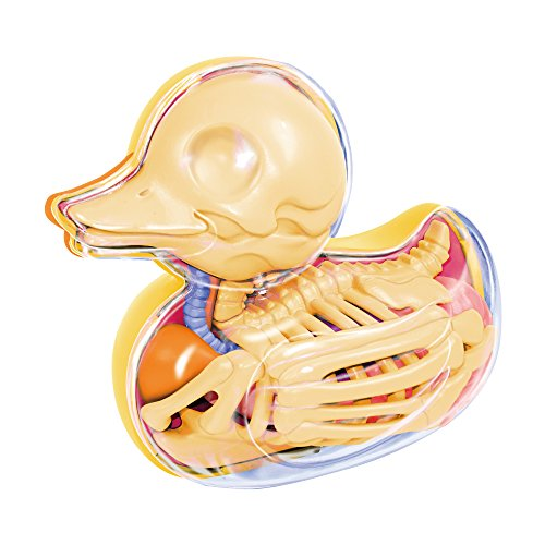 (Bathing Ducky Funny Anatomy by Jason Freeny )