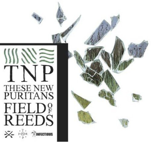 Field of Reeds - Puritan Japan