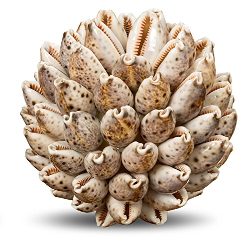 Whole House Worlds Beach Chic Cowry Shell Ball, Bowl or Vase Filler, All Natural Materials, White with Brown Speckles, 4 Inches in Diameter, Coastal Collection, Tropical Accent,